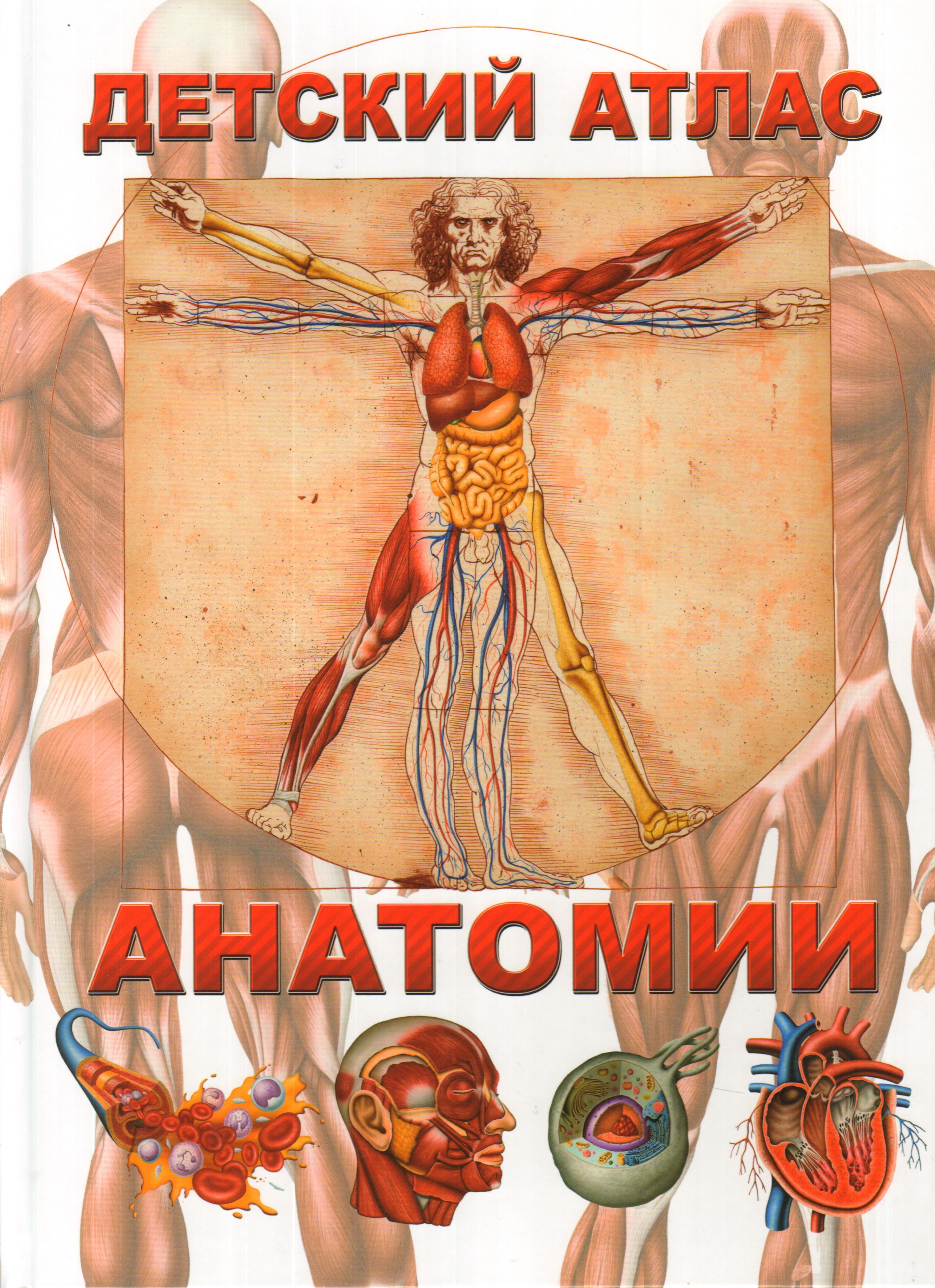 Детский атлас анатомии